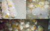 চৌধুরী বাজার মানব কল্যাণ সংস্থার ঈদ সামগ্রী বিতরন